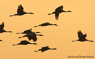 Flying-geese-silhouette-blog-horizontal-400x250