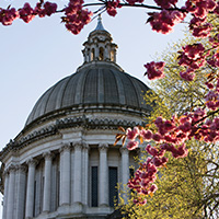 wa_state_capitol_cupola_cherry_blossoms_blog_square_200x200