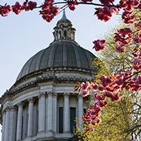 wa_state_capitol_cupola_cherry_blossoms_blog_square_200x200